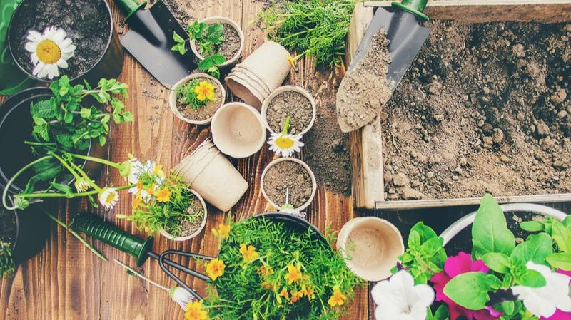 Ésotérisme : quelles sont les plantes les plus utilisées ?